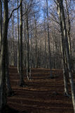 El Montseny Arkivbild