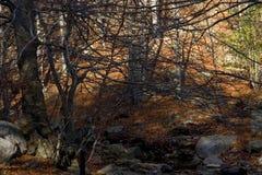 El Montseny Royaltyfri Bild
