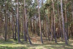 El mosaico de árboles. Fotos de archivo libres de regalías