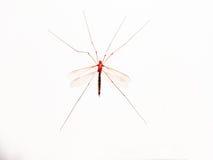 El mosquito gigante ilustración del vector