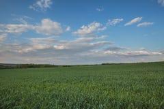 El movimiento de las nubes tormentosas sobre los campos del whea del invierno Foto de archivo