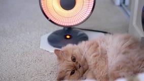 El movimiento del gato persa se acuesta y disfruta de calor metrajes