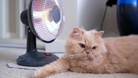 El movimiento del gato persa se acuesta y disfruta de calor almacen de video