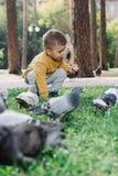 El muchacho alimenta palomas Foto de archivo
