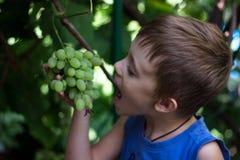 El muchacho arranca con los dientes un pedazo de un manojo de uvas imagen de archivo
