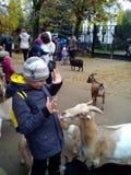 El muchacho comunica con los animales foto de archivo