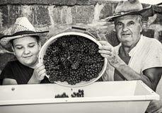 El muchacho con el abuelo derrama manojos de uvas a la prensa de la vid, colo Fotografía de archivo