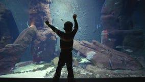 El muchacho del niño está estudiando el mundo subacuático con muchos diversos pescados que naden en un acuario almacen de metraje de vídeo