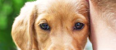 El muchacho dobló su cabeza a una pequeña raza del perro del spaniel_ del cocker fotos de archivo libres de regalías