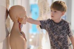 El muchacho en el centro de la ciencia entretenida fotografía de archivo libre de regalías