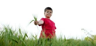 El muchacho en el campo del centeno, aislado Fotos de archivo