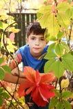 El muchacho en el otoño coloreó las hojas salvajes de la uva Imágenes de archivo libres de regalías