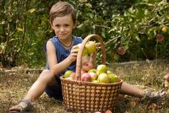 El muchacho en el jardín que se sienta con una cesta por completo de manzanas imágenes de archivo libres de regalías