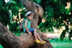 El muchacho en un árbol Fotos de archivo