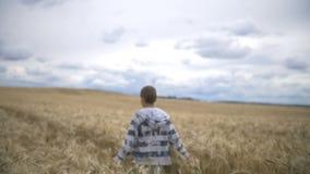 El muchacho está caminando a lo largo del campo de trigo, cámara lenta almacen de metraje de vídeo