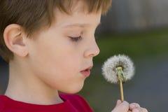 El muchacho hace un deseo en un diente de león Fotografía de archivo libre de regalías