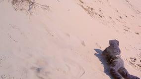 El muchacho juguetón del niño es rodante y cayendo abajo de las dunas de arena vare en las vacaciones almacen de video