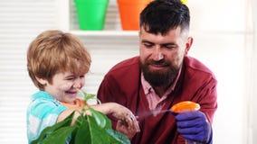 El muchacho lindo del ni?o ayuda a su padre a cuidar para las plantas Concepto, naturaleza y cuidado de la primavera Alm?cigo de  almacen de metraje de vídeo