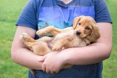 El muchacho lleva a cabo en sus manos una pequeña raza del perrito del spaniel_ del cocker fotos de archivo