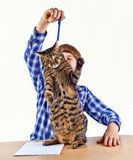 El muchacho que aprende para la escuela tiene una rotura y juegos con su gato Imagenes de archivo