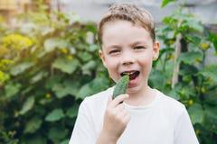 El muchacho que se sostenía recientemente escogió del pepino del jardín imagenes de archivo