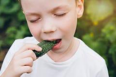 El muchacho que se sostenía recientemente escogió del pepino del jardín fotos de archivo libres de regalías