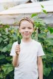 El muchacho que se sostenía recientemente escogió del pepino del jardín fotos de archivo