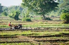 El muchacho que trabaja con un arado del motor en arroz coloca Fotografía de archivo libre de regalías