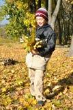 El muchacho recolecta las hojas amarillas en jardín otoñal Fotografía de archivo libre de regalías