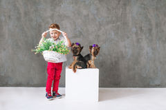 El muchacho rubio encantador con una cesta de las flores y dos pocos terrieres de Yorkshire Fotos de archivo