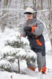 El muchacho sacude spruce con nieve Imágenes de archivo libres de regalías