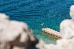 El muchacho salta en el mar Foto de archivo libre de regalías