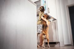 El muchacho y el perro intentan encontrar algo delicioso en rifregerator Imagen de archivo