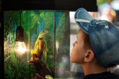 El muchacho y una iguana Imagen de archivo