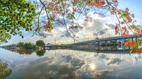 El muelle escénico del río en los suburbios con las ramas rojas del poinciana real florece Fotografía de archivo libre de regalías