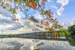 El muelle escénico del río en los suburbios con las ramas rojas del poinciana real florece Foto de archivo libre de regalías