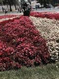 El mundo alrededor de las flores Foto de archivo libre de regalías