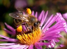 El mundo de insectos Foto de archivo