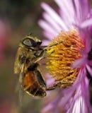 El mundo de insectos Fotografía de archivo libre de regalías
