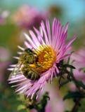 El mundo de insectos Fotografía de archivo
