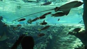 El mundo de los pescados, muchacho visitó el parque marino con los calambre-pescados en el acuario grande almacen de video