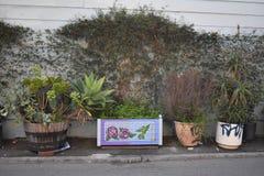 El mundo del ` s de San Francisco reconoció los murales balsámicos del callejón, 3 Fotos de archivo