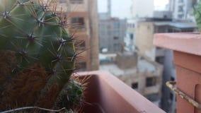 El mundo detrás del cactus imagen de archivo