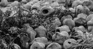El mundo que viene me recuerda - el desmontar en curso - WW1 - Zillebeke foto de archivo libre de regalías