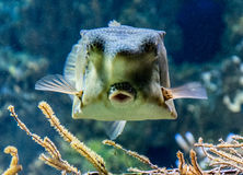 El mundo subacuático de los océanos Fotografía de archivo