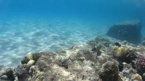 El mundo subacuático del Mar Rojo Egipto almacen de video