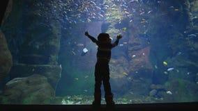El mundo submarino, muchacho del niño está estudiando muchos diversos pescados que naden en un acuario metrajes