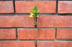 EL Muro d'en de Ãrbol Photos stock