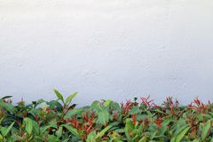 El muro de cemento con las paredes del árbol adorna la parte inferior larga de la imagen Fotos de archivo