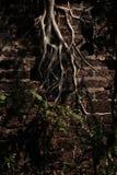 EL Muro del en de Ãrbol Fotografía de archivo libre de regalías